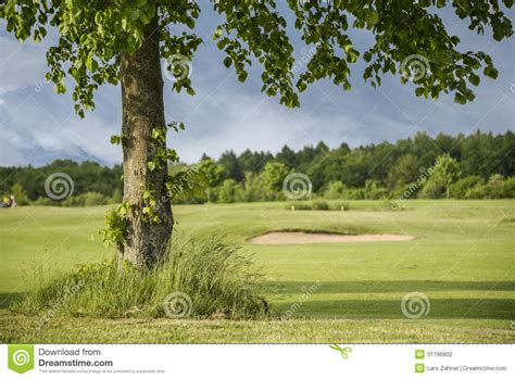 golf tree tree on golf course stock photography image 31196802