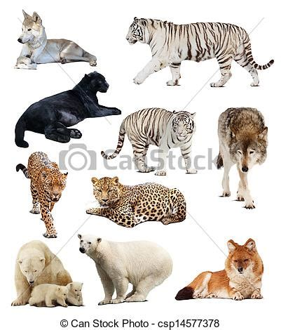 set of images of carnivores . set of images of carnivores