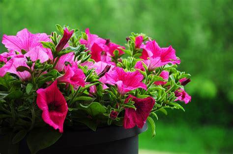 fiori primaverili fiori primaverili quali sono e come curarli per avere un