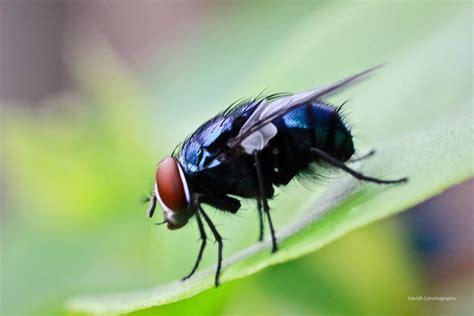 Toxilat Racun Lalat 3 In One kemanakah lalat pas malam hari kutalkutil