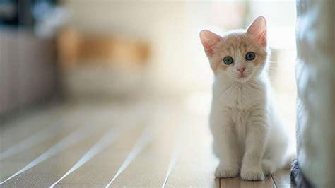 kittens wallpaper   stunning full hd