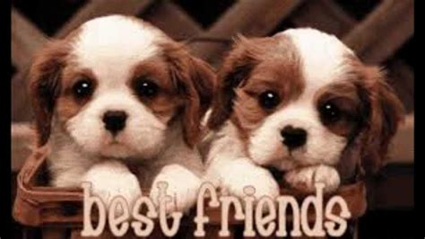 friend best best friends forever wallpapers wallpaper cave