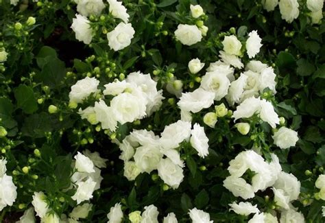 acquisto fiori on line prodotti vendita piante giardinaggio vivaio