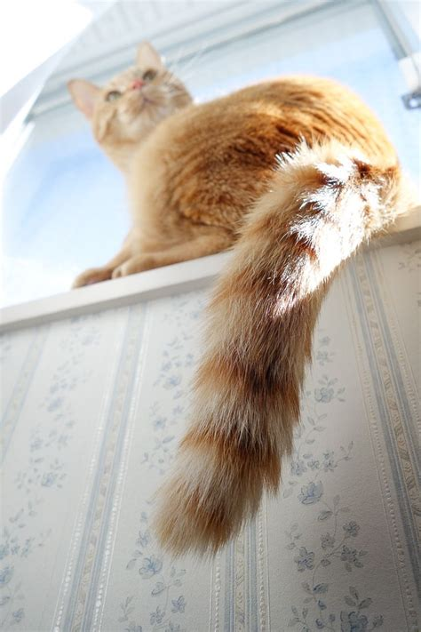 why do cats swing their tails 17 best images about cats tail of two kitties on