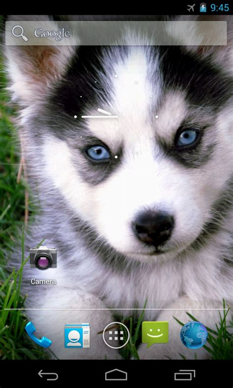 baby shoo for puppies baby dogs wallpaper android apps on play