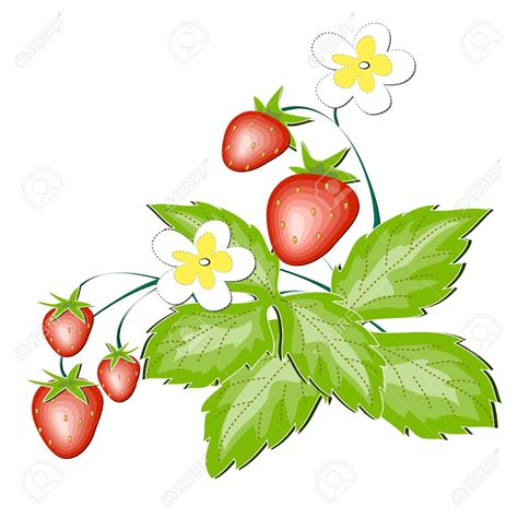 strawberry clipart wild berries clip art cliparts