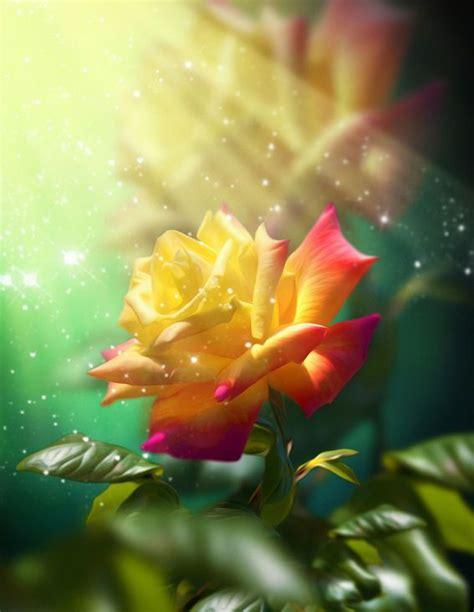 imagenes de rosas las mas bonitas la rosa mas hermosa del mundo flores exoticas im 225 genes