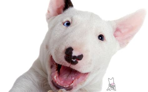 and the puppy gentle touch soap bull terrier all handcrafted puppy bar soap ebay