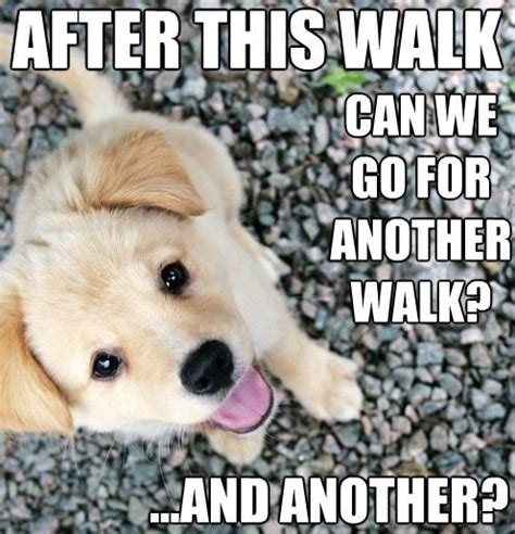 cute puppy love memes image memes at relatably com