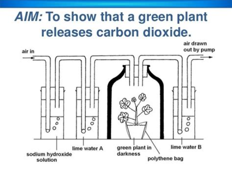 design an experiment to determine if plants respire experiment do plants release carbon dioxide when they