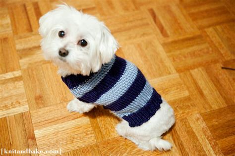 basic knitting pattern for dog coat adorable dog clothes to make for your favourite pooch