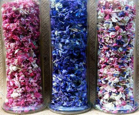 fiori essiccati fiori secchi piante appartamento fiori per arredo