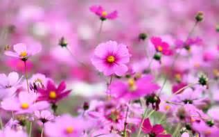 Hd Images Of Flowers Desktop Wallpapers Animals Wallpapers Flowers Wallpapers