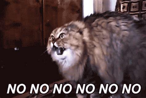 No Cat Meme - no no no cat memes and comics