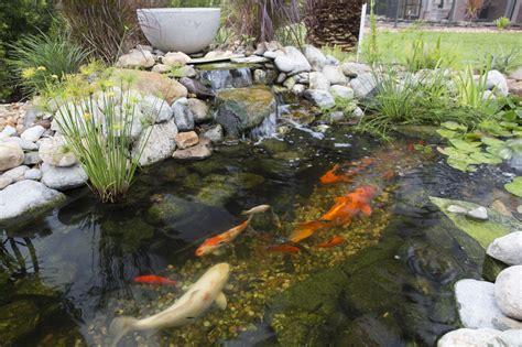 is a backyard pond an ecosystem backyard ecosystem pond projectsflmelbourne vero beach