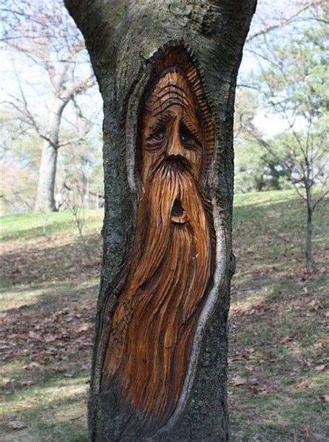 Panoramic Wall Murals parks high park a face carved in the tree toronto