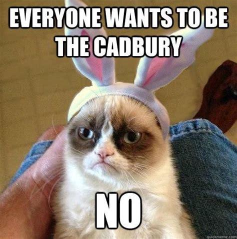 Cute Easter Meme - tard the grumpy cat tardar sauce grumpy cat pinterest