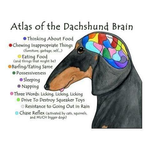 dachshund memes | liz&rio