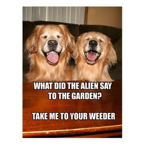 Golden Retriever Meme - golden retriever birthday meme pictures to pin on