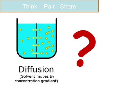 biological exles of diffusion