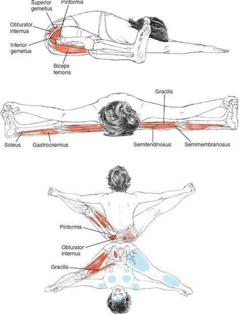 17 Best ideas about Upper Leg Muscles on Pinterest