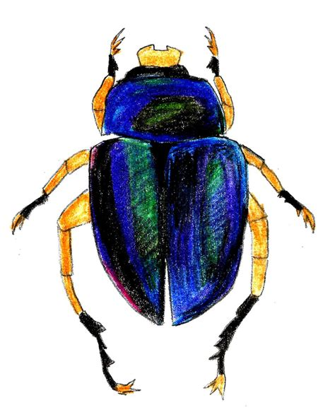 show me a picture of a book how to draw a scarab beetle 9 steps with pictures wikihow