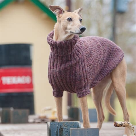 and in a puppy dogs in jumpers redhound for dogs