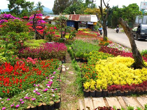 Jual Bibit Bunga Lavender Jakarta 10 penjual bibit dan tanaman hias villa miranti kota