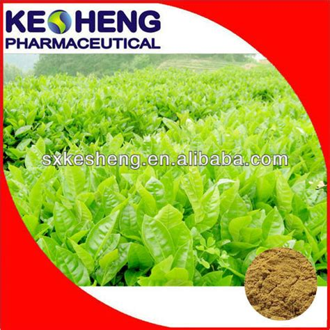 Eye Care Herbal Tech 1 herbal powder supplier green tea powder or green tea juice