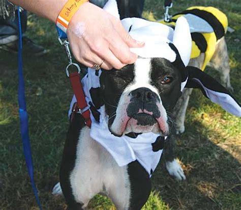 rottweiler rescue omaha a quot howlin time local news enterprisepub