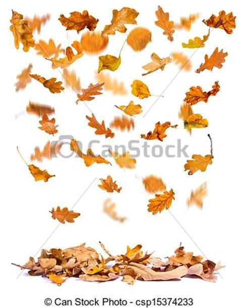drawings of autumn oak leaves falling oak autumn leaves