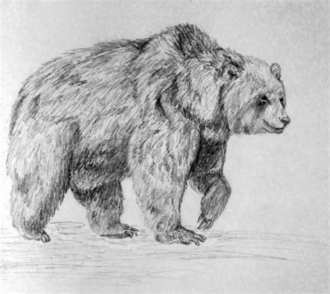 imagenes a lapiz de osos dibujo de oso a lapiz imagui
