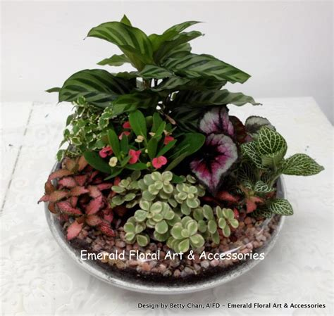 green plant arrangements