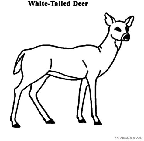 deer family coloring page deer coloring pages white tailed coloring4free
