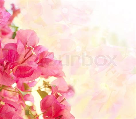 Wallpaper Home Decoration by Beautiful Abstract Floral Background With Pink Flowers