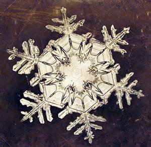 Snow Flake Bentley Photomicrograph Of Snowflakes By Wilson Bentley 1885