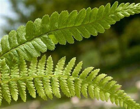 piante da giardino esterno piante verdi da esterno piante da giardino specie da
