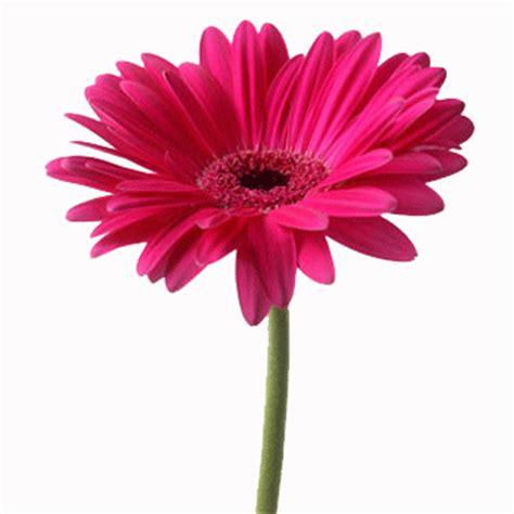fiori regalare ad una ragazza spedizione e consegna fiori composizioni di fiori