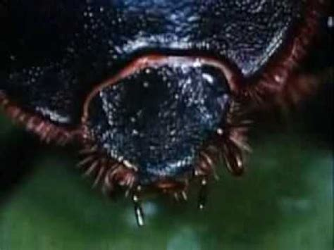 backyard science videos 15 best images about insects 1st grade lme 318 on pinterest the very leo lionni