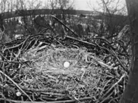 Loan Letter For Cdac wgal television crew accused of scaring eagle from popular eagle nest local news
