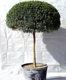 Small Trees For Patio Pots by Trees For The Small Garden And Patio