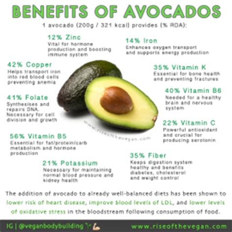 healthy fats other than avocado 10 reasons you need more avocados in your