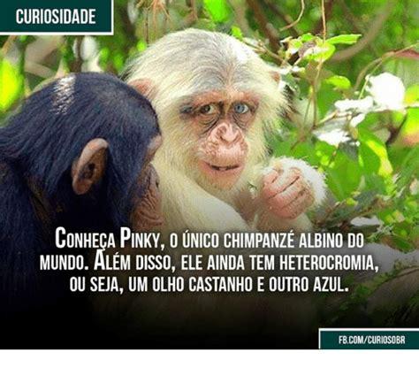 Chimp Meme - 25 best memes about chimpanzees chimpanzees memes