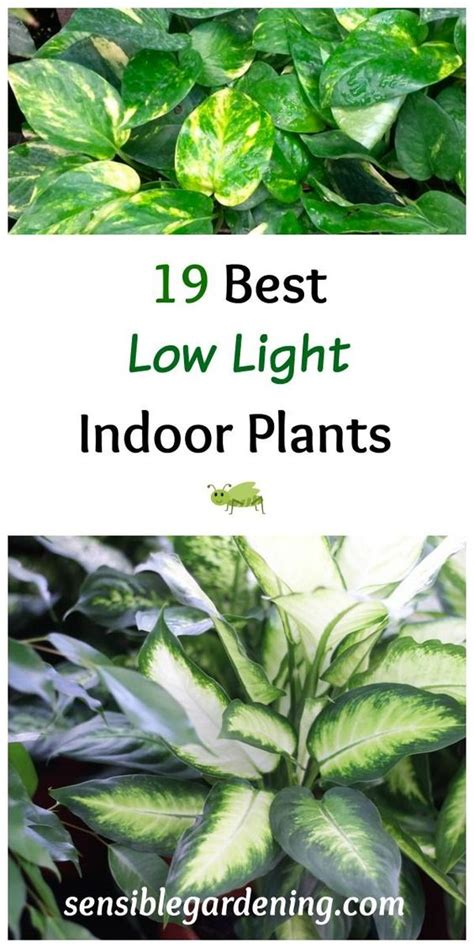 easy care indoor plants pinterest the world s catalog of ideas