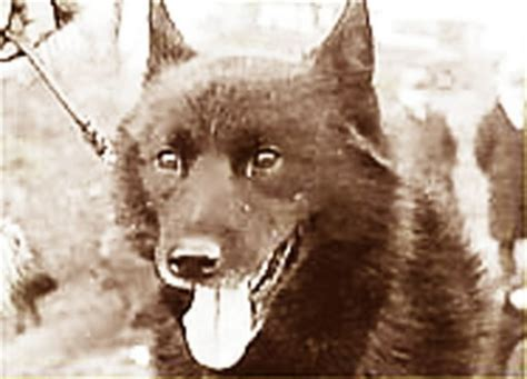 balto puppies visit balto and iditarod exhibit at cleveland museum of history cleveland