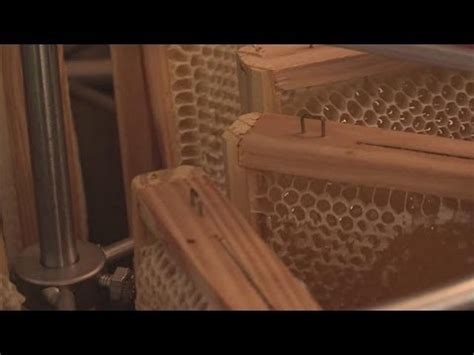 how to extract honey from a top bar hive how to make your own beehive doovi