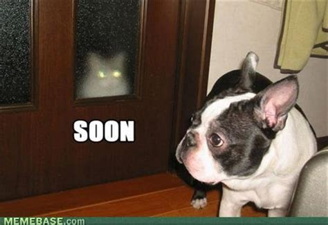 Soon Cat Meme - soon pug dog and cat dump a day