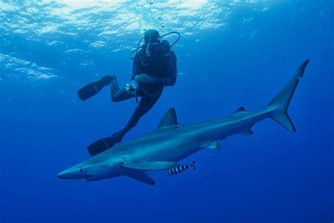 blue dive blue shark diving blue wilderness