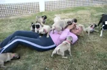 pug running gif pug puppies gifs find on giphy
