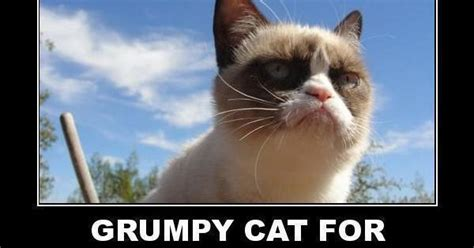 grumpy cat for president 2016 grumpy cat for president in 2016 a time to laugh is
